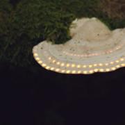 Ufo_Mushroom 845