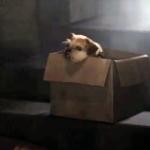 Alita Hund